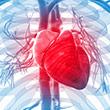 לב בריא